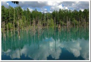 マツコの知らない世界「美しすぎる!池の世界」のネタバレと感想とまとめ。