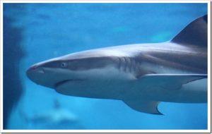 マツコの知らない世界「サメの世界」のネタバレと感想とまとめ。