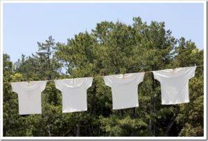 マツコの知らない世界「白Tシャツの世界」のネタバレと感想とまとめ。