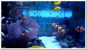 色鮮やかな海水魚を飼ってみたい!海水魚水槽立ち上げに必要な道具は?