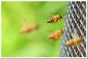 マツコの知らない世界「屋上ハチミツの世界」のネタバレと感想とまとめ。