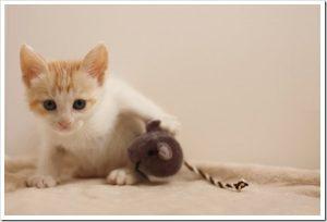 マツコの知らない世界「飼わなくても虜になる!ネコ画像の世界」のネタバレと感想とまとめ。