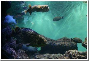 マツコの知らない世界「深海魚の世界」のネタバレと感想とまとめ。
