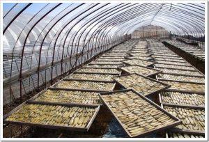 マツコの知らない世界「干し芋の世界」のネタバレと感想とまとめ。