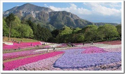 s-hitsujiyama_040120_010532_PM